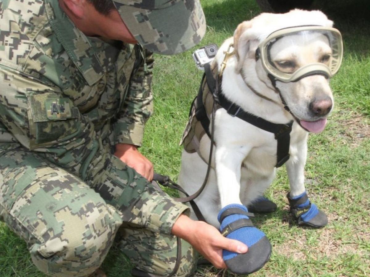 frida héroe canina del sismo