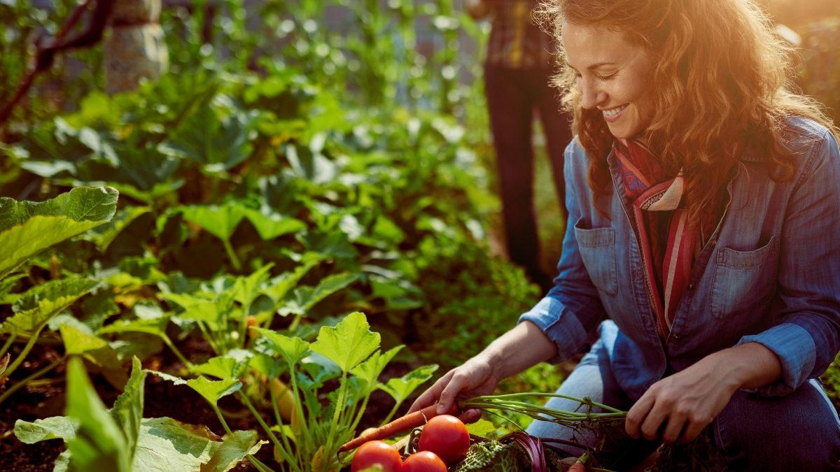 mujer recolectando verdura
