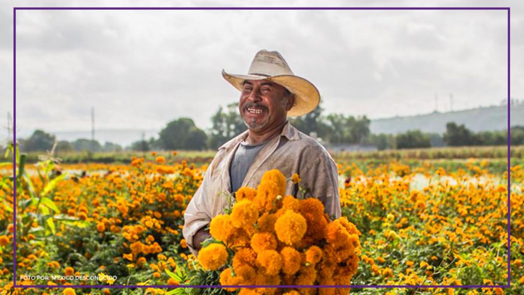 productor de flor de cempasúchil