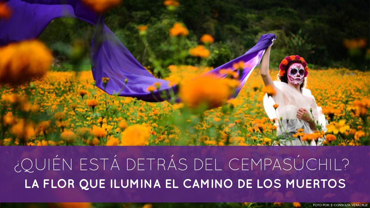 quién está detrás del Cempasúchil, la flor que ilumina el camino de los muertos